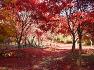 가을단풍여행! 제천의 용두산으로 떠나볼까요?