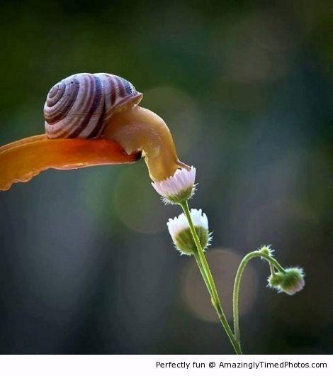 놀라운 사진들