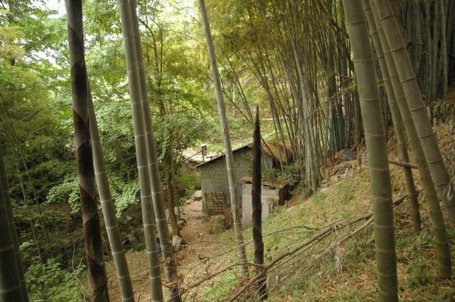 해당화 시인의 새 거처 숲속 오두막집 ^^
